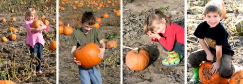 pumpkin patch_mml sm